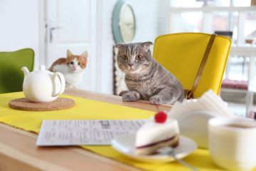 Fourfooted House Cat Café in Kyiv
