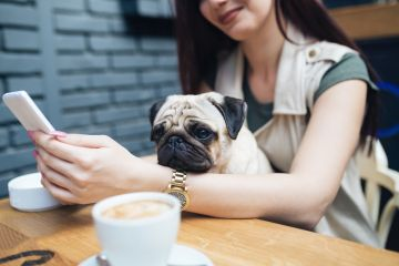 Dog-Friendly Places in Kyiv
