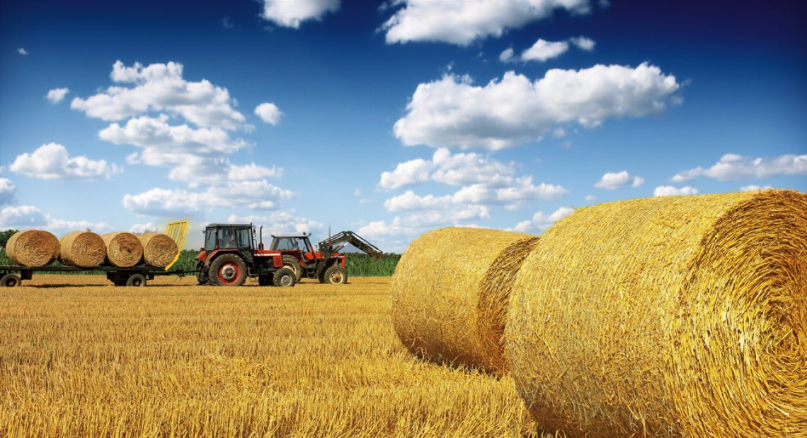 Syngenta Solutions: Expert Overview of Ukrainian Agriculture