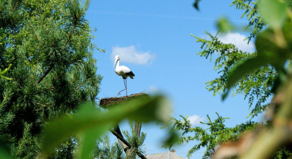 stork in nest in woods