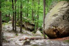 huge stone in forest