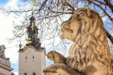 Lion statue and a church on the background in Lviv