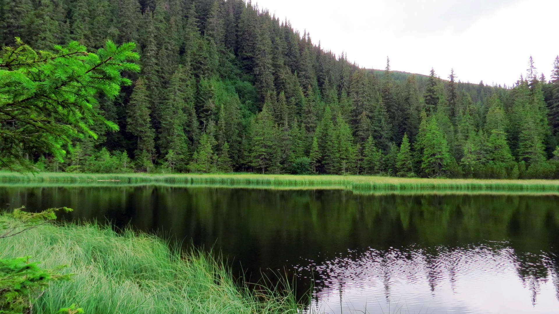 lake in deep forest