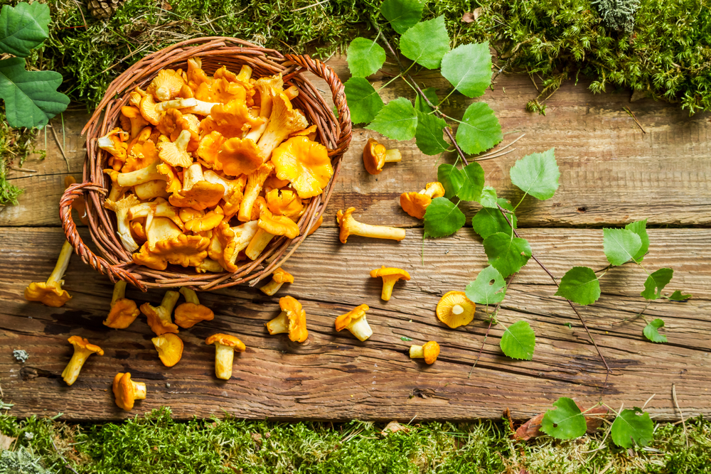 Best Places for Collecting Mushrooms near Kyiv