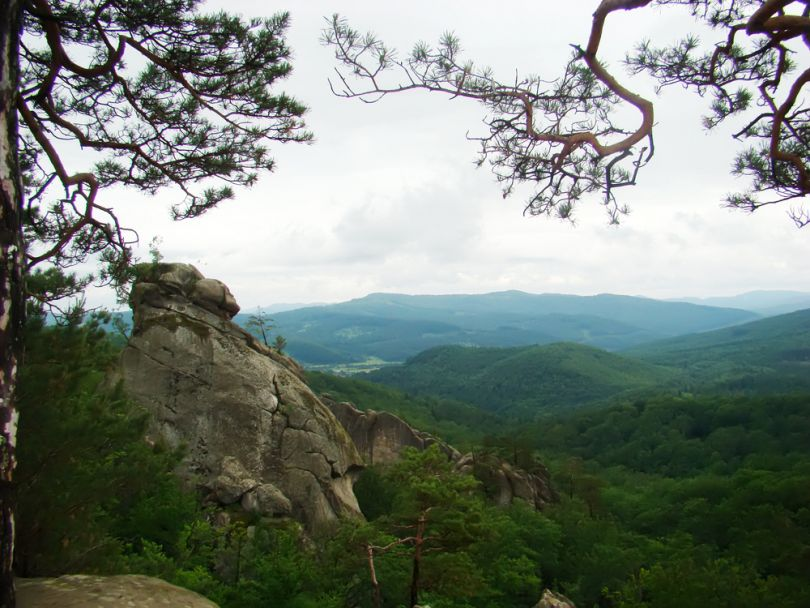 beautiful view over forest and rock