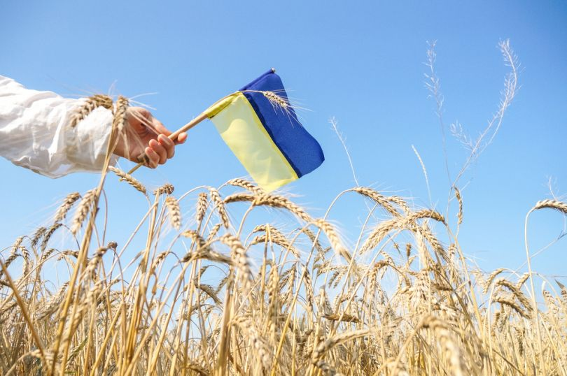 hand holding ukrainian flag over field of wheat