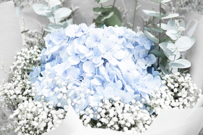 composition of white and blue flowewrs