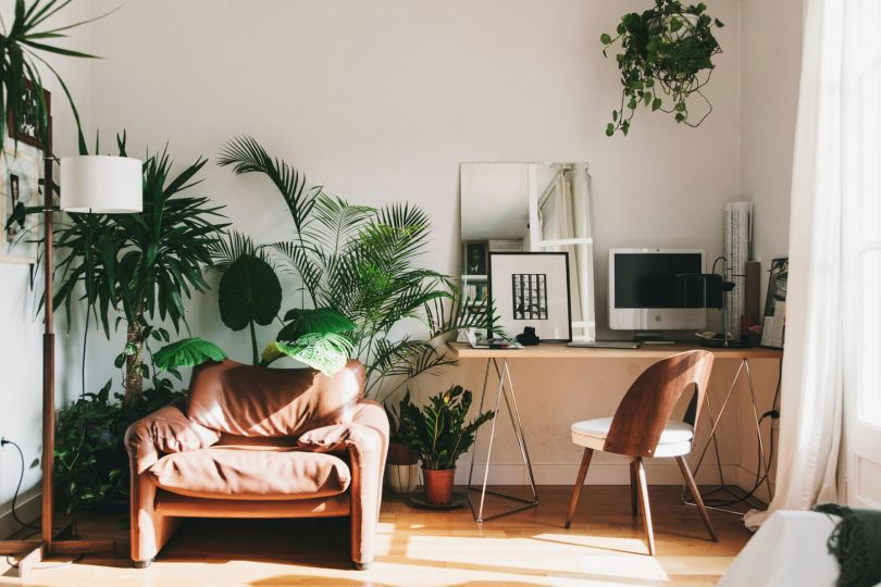 Light apartment with plants